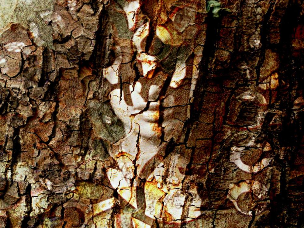 wood by komlaish achall